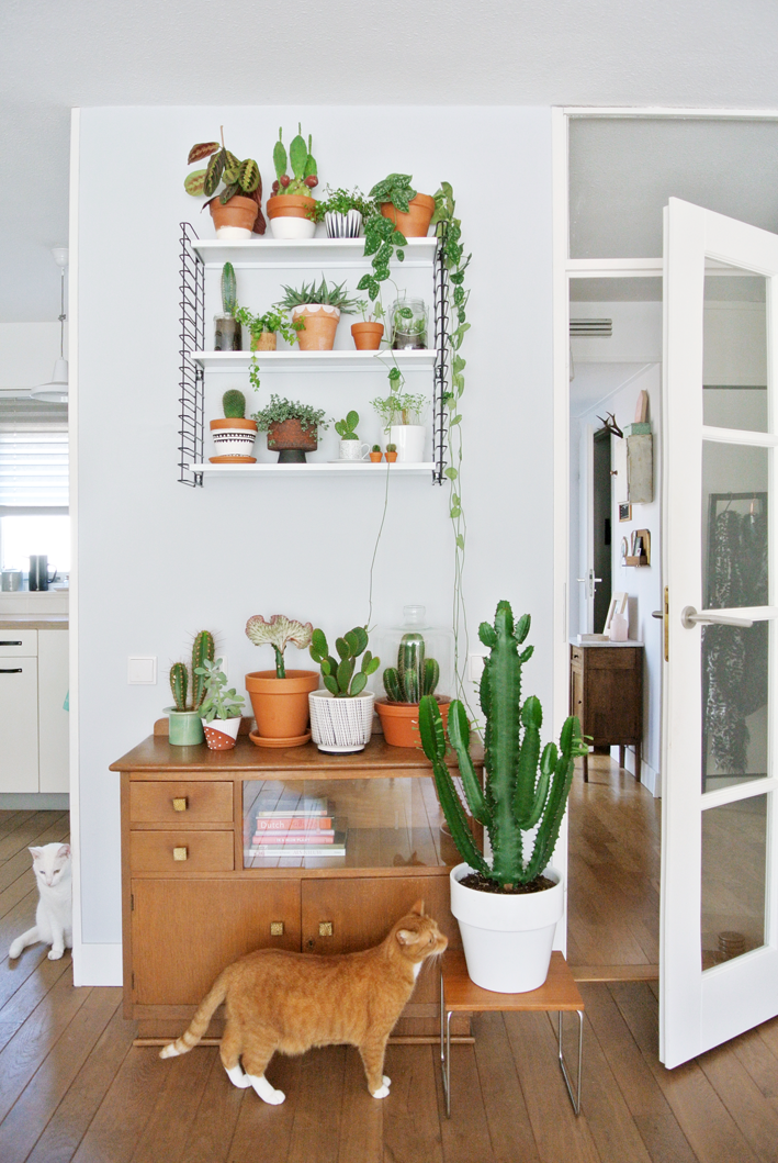 My Attic - Urban Jungle Bloggers - Show Your Plants