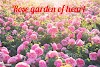 Rose garden of heart