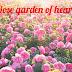 Rose garden of heart