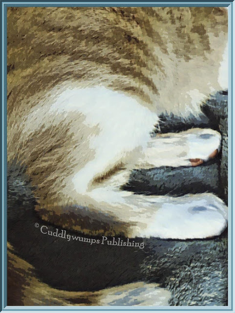 #catspaws
