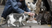 6000 ευρώ πρόστιμο σε γυναίκα που τάιζε γάτες στη Λήμνο