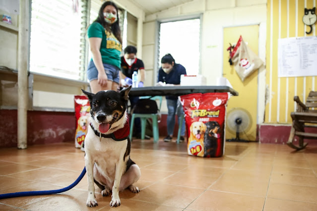 UP Doggo Day