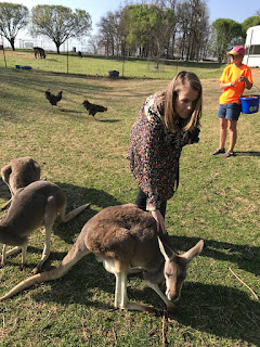 Kangaroos and joeys at Wild Wilderness Drive Through Safari in Gentry, Arkansas