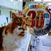 31 ΕΤΩΝ! Η γηραιότερη γάτα έφυγε από την ζωή