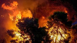 Ο μελισσοκόμος, οι δασικές πυρκαγιές και η πρόληψή τους