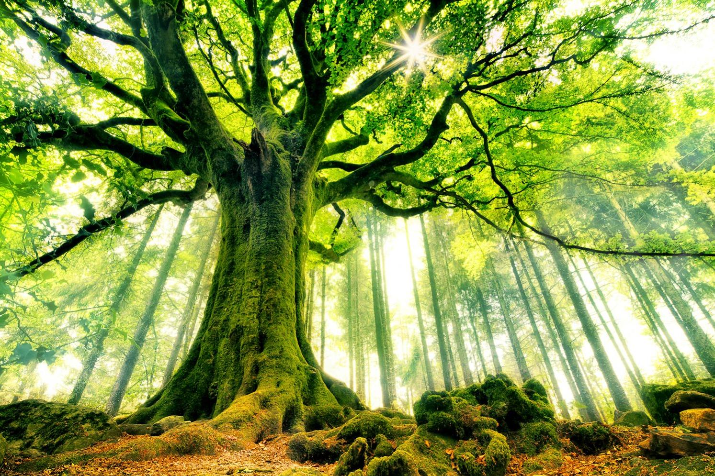 De grands r ves partager le symbole de l 39 arbre dans les for Prix de l elagage d un arbre
