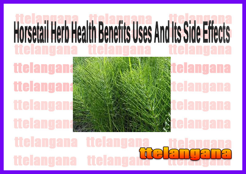 Horsetail Herb Health Benefits Uses And Its Side Effects