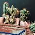 Truques simples e muito eficientes para manter suas plantas saudáveis durante os dias de calor