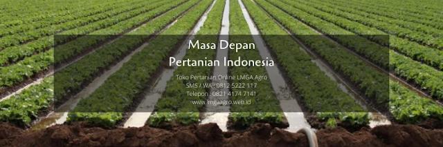 pertanian,budidaya tanaman,budidaya,usaha pertanian,lmga agro
