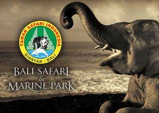 Lowongan Kerja Taman Safari Indonesia Terbaru 2020