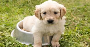 How To Stop Your Puppy Toileting Inside