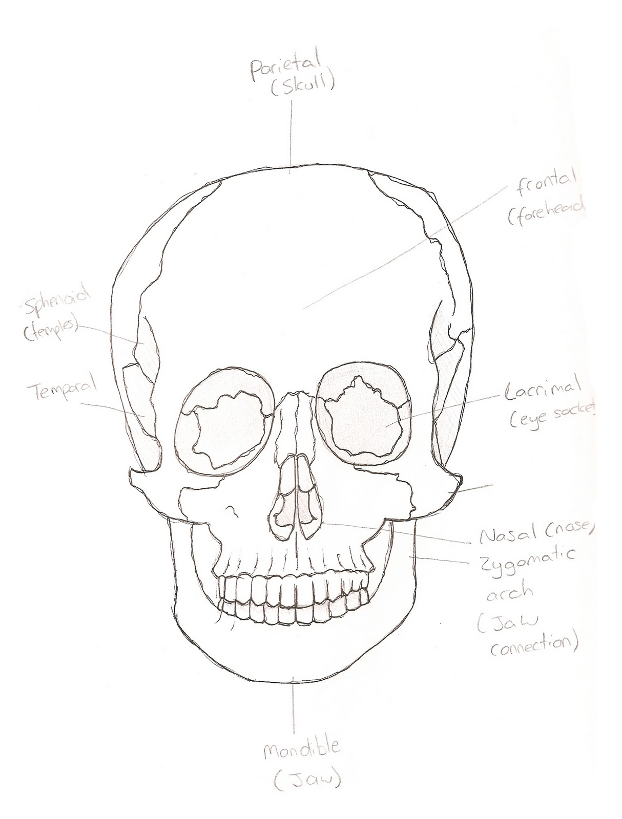 3d Modelling 3d Modelling Topology Facial Anatomy