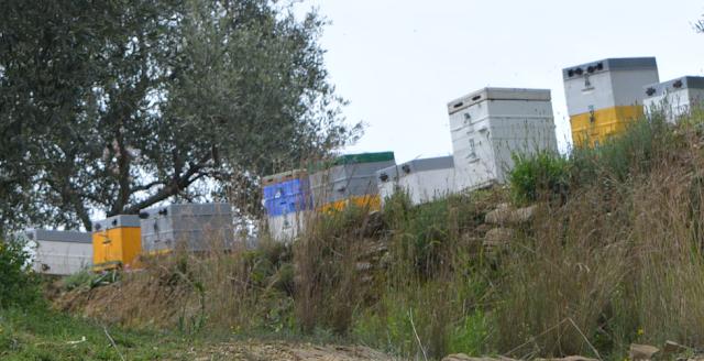 Νέα από τη πορτοκαλιά και τις ανοιξιάτικες νομές: Τι λέει η ζυγαριά σήμερα στο Αγρίνιο - 30 Μαρτίου