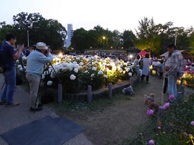 シャクヤク園のライトアップ(ナイトライブ) お琴の演奏会
