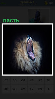 Широко открытая пасть льва, видны зубы и торчат усы