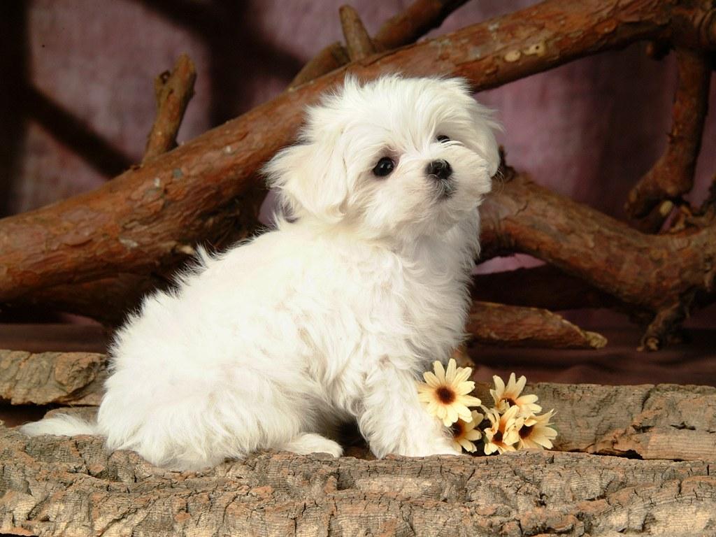 Funny Animals Zone Cute White Fluffy