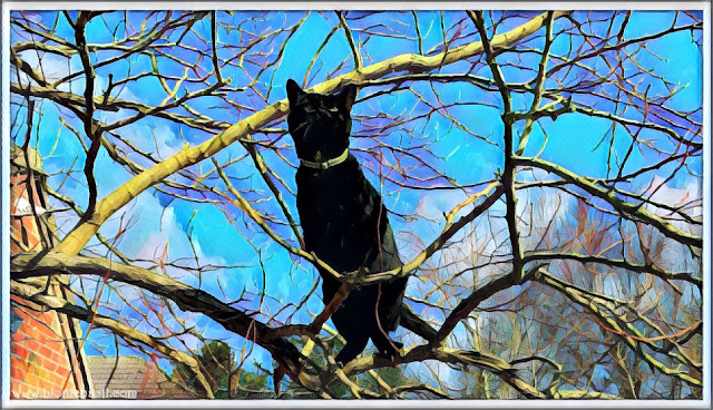 Tree Time with Sauce ©BionicBasil® Caturday Art