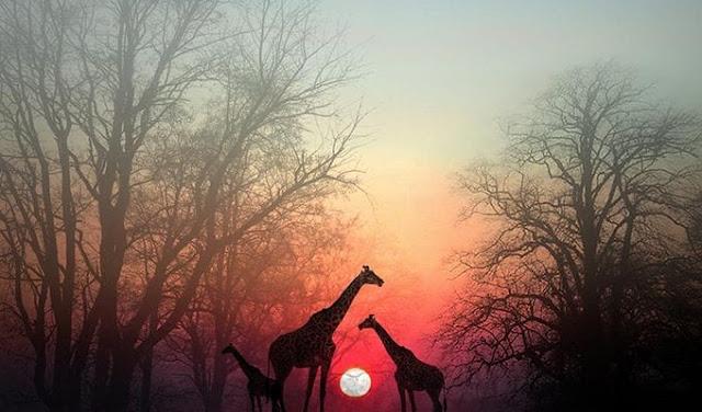 Остановитесь на минутку, чтобы душа вас догнала: красивая африканская притча Фото советы Мудрость интересное жизнь душа