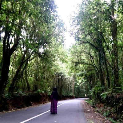 hutan lembah sembalun