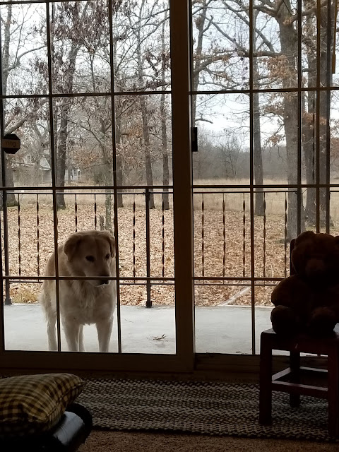 Big yellow dog standing on porch looing in sliding glass door