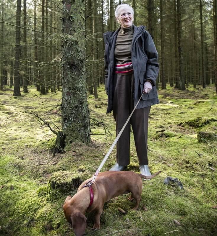 Prince Henrik's inheritance royal dog Tillia. The Royal Hunting Lodge in Trend. Crown Prince Frederik and Crown Princess Mary