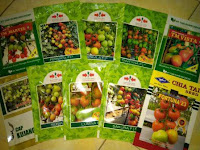 berkebun buah dan sayur, benih tomat f1, jual murah benih, lmga agro