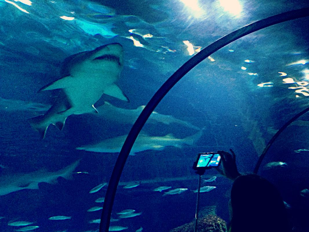 Rekin w pakiecie z selfie - Oceanarium w Barcelonie