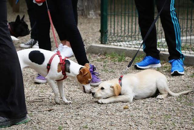 Кученцата в Пловдив тръгнаха на училище
