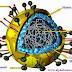 নিপাহ ভাইরাস ও এর প্রতিকার ( Nipah virus and its prevention )