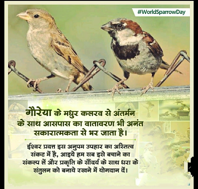 World Sparrow Day Quotes Images, Pictures, Photos, Status, Shayari, Poem in Hindi for WhatsApp Facebook Instagram