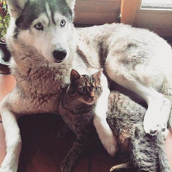 Điểm mặt 17 cặp đôi chó mèo cực dễ thương