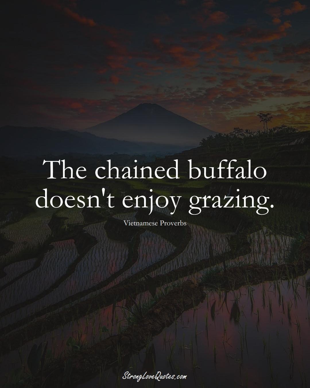 The chained buffalo doesn't enjoy grazing. (Vietnamese Sayings);  #AsianSayings