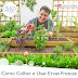 VÍDEO - Como Colher e Usar Ervas Frescas