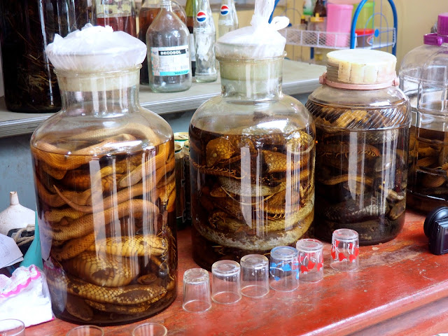 Jars of snake whisky in Luang Prabang, Laos