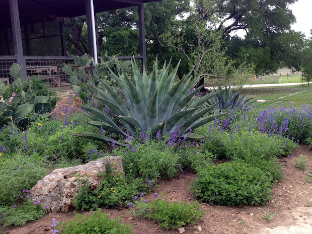 Texas Hill Country Landscaping Ideas