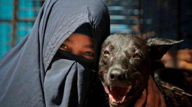 Diprotes Warga karena Bau dan Mengganggu, Tujuh Ekor Anjing Hesti Sutrisno Dievakuasi LSM