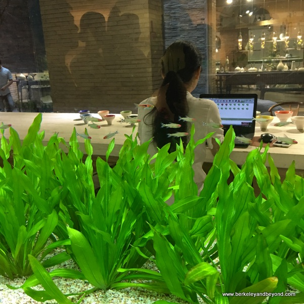 cashier seen through aquarium at Ou Ceramic in Wenzhou, China