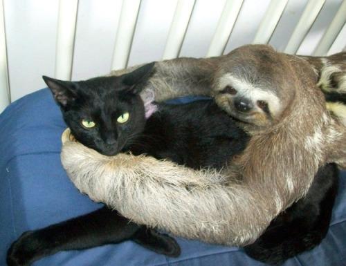 foto de abrazo entre un mico y un gato