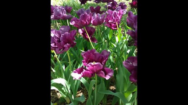Botanica Wichita KS Gardens spring 2016 0268