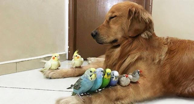 15 Φωτογραφίες που αποδεικνύουν ότι οι σκύλοι είναι τα πιο πιστά ζώα