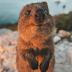 Ποιο είναι το πιο ευτυχισμένο ζώο στον κόσμο;