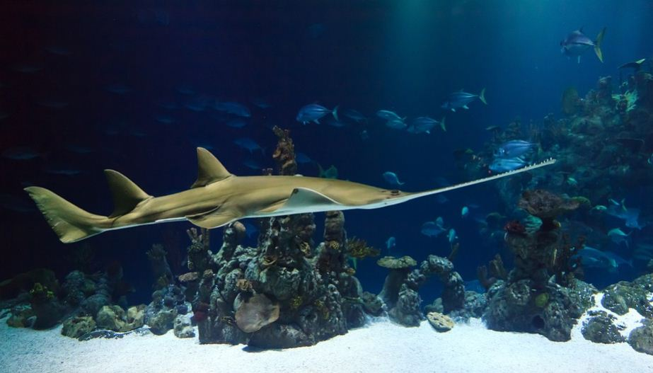 Cara Membersihkan Akuarium Cocok untuk Pemula