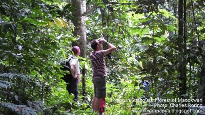 Dutch visitors were watching birds in Susnguakti forest of Manokwari regency, Indonesia