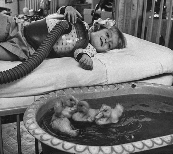 These 15 Incredibly Rare Historical Photos Will Leave You Speechless - Animals used to be involved in medical therapy as early as 1956.