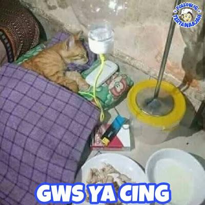 8 Meme 'Tingkah Lucu Kucing' yang Kelakuannya Ngegemesin Banget