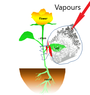 Transpiration, getting to know plants