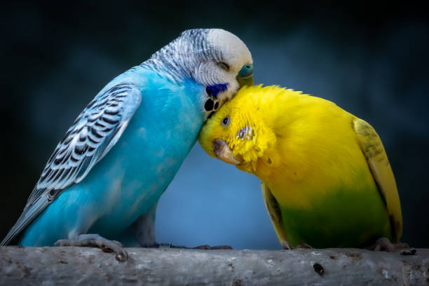Breeding Pet Birds – What you Need to Know