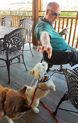Visiting Dog Friendly wineries on Long Island.  Pet friendly Macari vineyards, Long Island NY