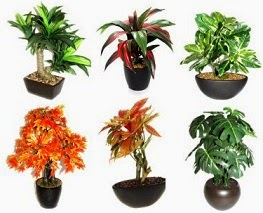 Bonsai Plants by Fourwall: Upto 70% Off – starts Rs.299 (Limited Period Offer)