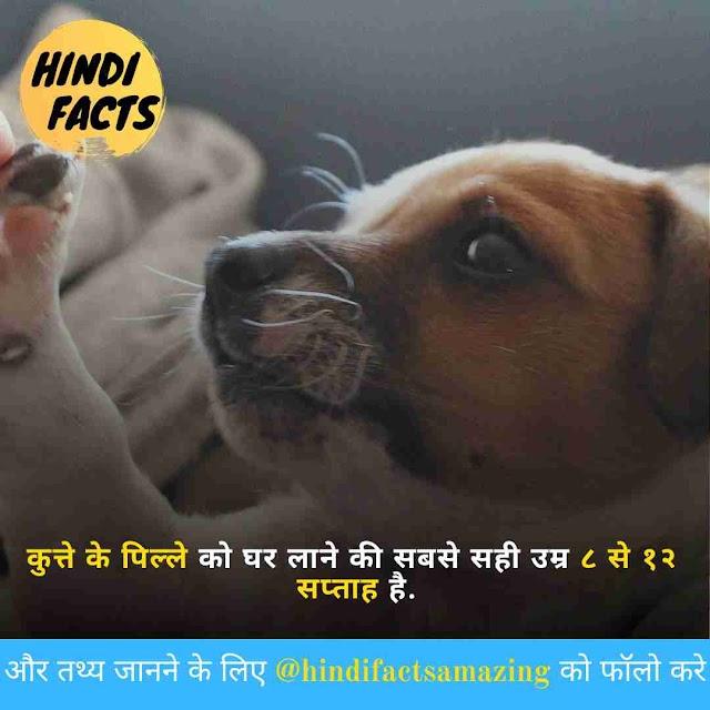 Dog in Hindi - कुत्तों के बारे में 70+ रोचक तथ्य